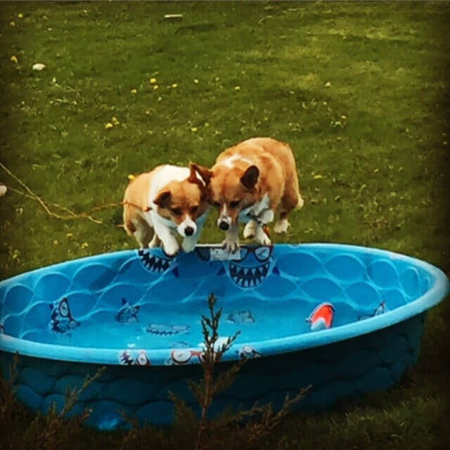 Bengie With His Friend In The Pool
