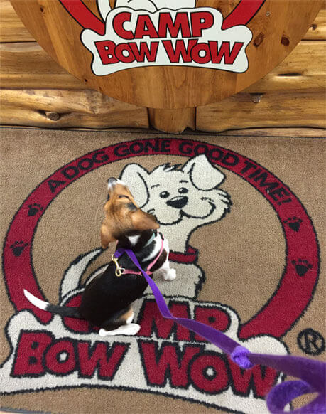 Nora At Camp Bow Wow